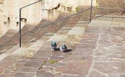Голуби на лестницах в парке Стоковые Изображения