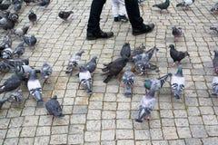 Голуби на квадрате Стоковая Фотография