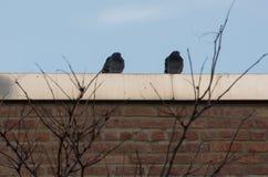 Голуби на крыше стоковые изображения rf