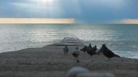Голуби на пристани во время шторма волны текстуры моря конструкции произведения искысства естественные сток-видео
