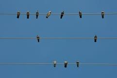 Голуби на проводе Стоковое Фото