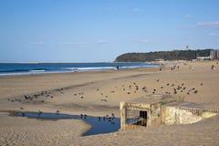 Голуби на пляже Дурбана на выходе стока Stormwater Стоковое Изображение