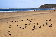 Голуби на пляже Addington Дурбана с рыболовами в предпосылке Стоковые Фото