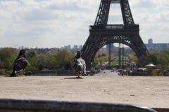 Голуби на уступе перед Эйфелева башней Стоковые Фотографии RF