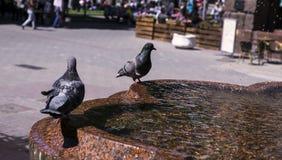 Голуби на фонтане Стоковые Фото