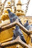 Голуби на stupa виска Swayambunath, Катманду, Nepa стоковое фото rf