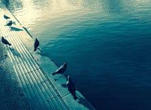 Голуби около пруда Стоковые Фотографии RF