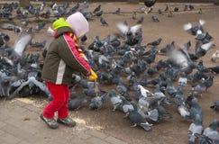 Голуби ребенка подавая Стоковое Изображение RF