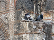 Голуби садясь на насест на византийской каменной стене Стоковое фото RF