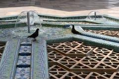 Голуби соединяют в foutain мечети в Марокко Стоковая Фотография RF