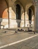 Голуби с аркадой Сан Marco Стоковая Фотография