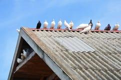 Голуби Стоковая Фотография RF