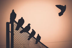 голуби Стоковое Изображение