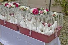 голуби wedding Стоковые Фотографии RF
