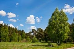 голубое лето неба пущи Стоковое Изображение