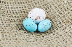 2 голубое и белые запятнанные яичка одно Стоковая Фотография RF