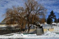 Голубое небо в январе Стоковое фото RF