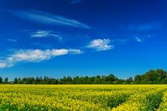 голубое небо зеленого цвета поля стоковое фото