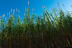 Голубое небо, зеленые растения Стоковая Фотография RF