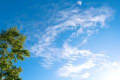 Голубое небо и зеленые деревья Стоковая Фотография RF