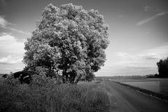Голубое небо и дорога Стоковое Изображение