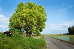 Голубое небо и дорога Стоковая Фотография