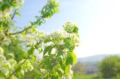 Цветки весны Стоковая Фотография