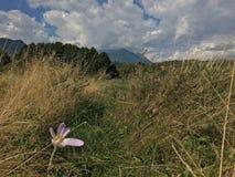 Голубое небо и цветок Стоковая Фотография