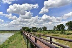 голубое небо моста Стоковая Фотография RF