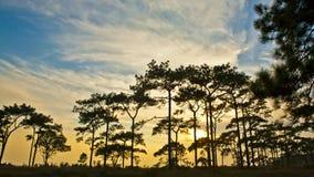 Голубое небо над лесом Стоковые Изображения