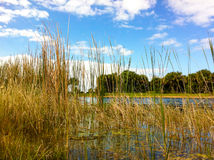 Голубое небо, пруд и вегетация Стоковые Фотографии RF