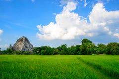 голубое небо риса зеленого цвета поля Стоковые Изображения