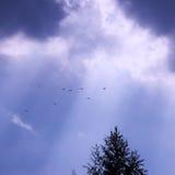 голубое небо с белыми облаками кумулюса и птицами дерева Стоковые Фотографии RF