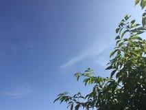 Голубое небо с зелеными ветвями Стоковое фото RF