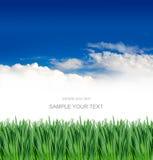 голубое небо травы вниз Стоковое Изображение