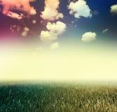 голубое небо травы вниз Стоковое Фото