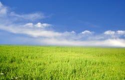 голубое небо травы поля вниз Стоковые Изображения