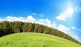 голубое небо травы поля вниз Стоковые Фотографии RF