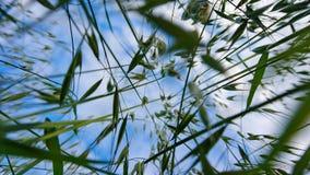 Голубое небо через траву стоковая фотография rf