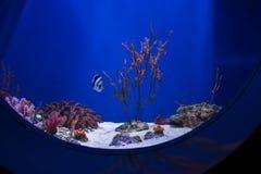 Голубое дно аквариума с кораллами, водорослями, рыбами и пейзажем Стоковая Фотография