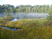 Голубое озеро в зеленом лесе Стоковые Изображения