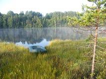 Голубое озеро в зеленом лесе Стоковое Фото