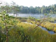 Голубое озеро в зеленом лесе Стоковая Фотография