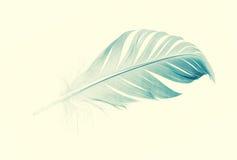 голубое перо Стоковая Фотография RF
