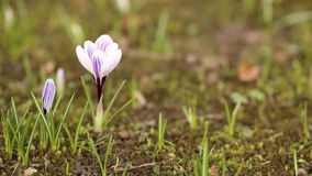 голубое поле цветет весна неба солнечная акции видеоматериалы