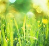 голубое поле цветет лето неба лужка травы вниз Стоковая Фотография RF