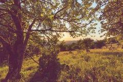 голубое поле цветет лето неба лужка травы вниз Стоковое Изображение RF