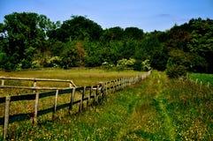 голубое поле цветет лето неба лужка травы вниз стоковые изображения rf