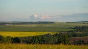 голубое поле цветет лето неба лужка травы вниз сток-видео