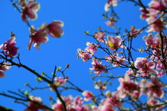 голубое розовое небо Стоковые Изображения RF